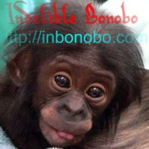 Profile picture for Indelible Bonobo