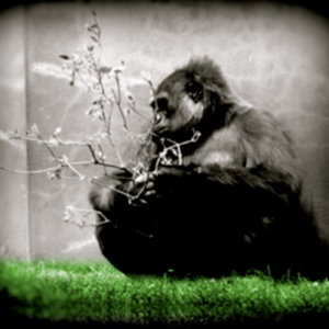 Profile picture for The Hominid Group