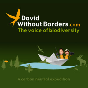 Profile picture for David Without Borders