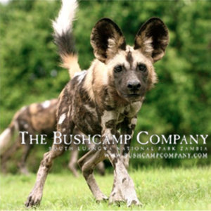 Profile picture for The Bushcamp Company