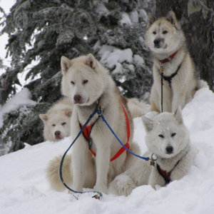 Profile picture for Base Camp Bigfork Dogsled Lodge