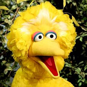Profile picture for big bird