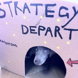 Profile picture for strategy dog