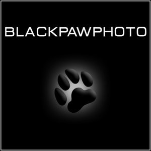 Profile picture for Black Paw Photo