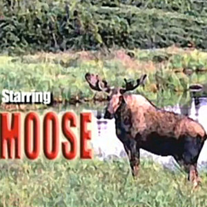 Profile picture for MOOSE