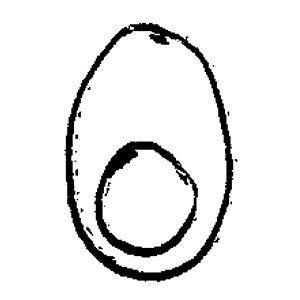 Profile picture for Boiled Egg