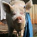 Edgar&#039;s Mission Farm Sanctuary