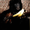 Gorillacoustic.com