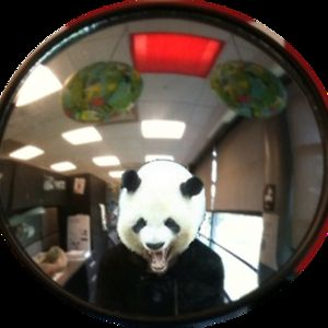 Profile picture for pandamans