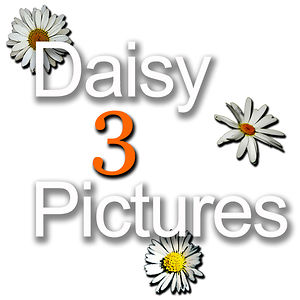 Profile picture for Daisy 3 Pictures