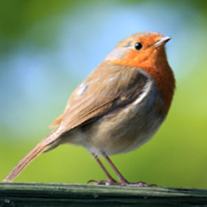 Profile picture for Simbird Simon Birds Wildlife UK