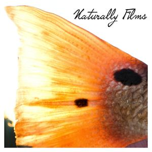 Profile picture for Naturally Films