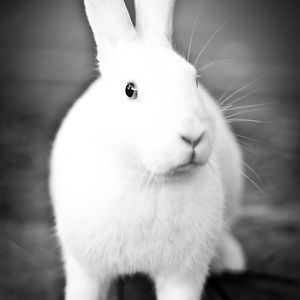 Profile picture for HRS Rabbit Center