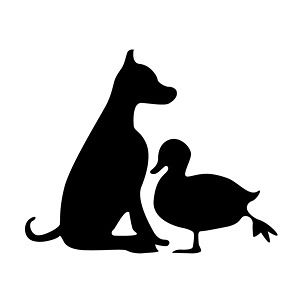 Profile picture for DOG AND A DUCK