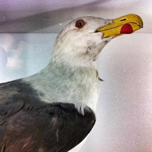 Profile picture for predatory bird