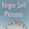 Virgin Soil Pictures