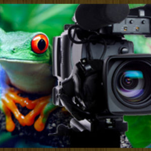 Profile picture for Shelly Solomon Leaping Frog Film