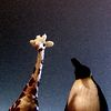 Giraffe and Penguin Productions
