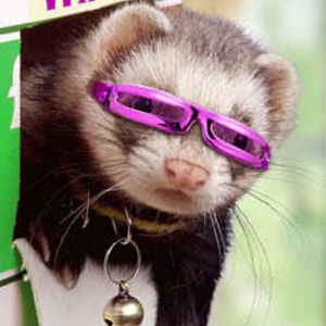 Profile picture for Trickferret