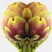 Artichoke Trust