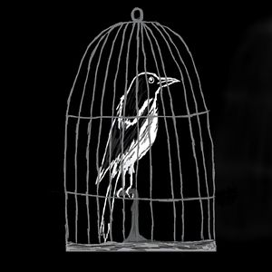 Profile picture for Caged Magpie Productions