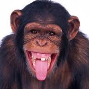 Profile picture for Monkey Nuts