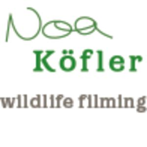 Profile picture for Noa Köfler