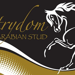 Profile picture for Strydom Arabian Stud