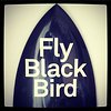 Fly Black Bird