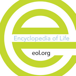 Profile picture for Encyclopedia of Life