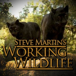 Profile picture for Working Wildlife