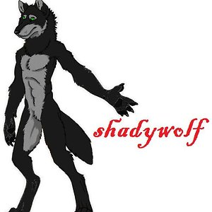Profile picture for shady wolf