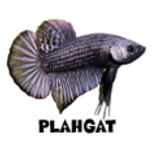 Profile picture for Plahgat
