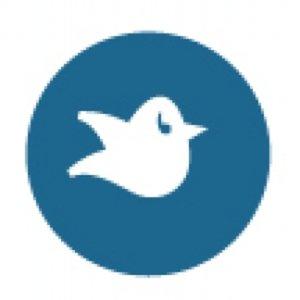 storybird on vimeo story bird 300x300