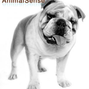 Profile picture for AnimalSense
