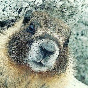 Profile picture for nice marmot