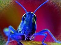 A Visual Journey for Entheogenic Ground Luminosity
