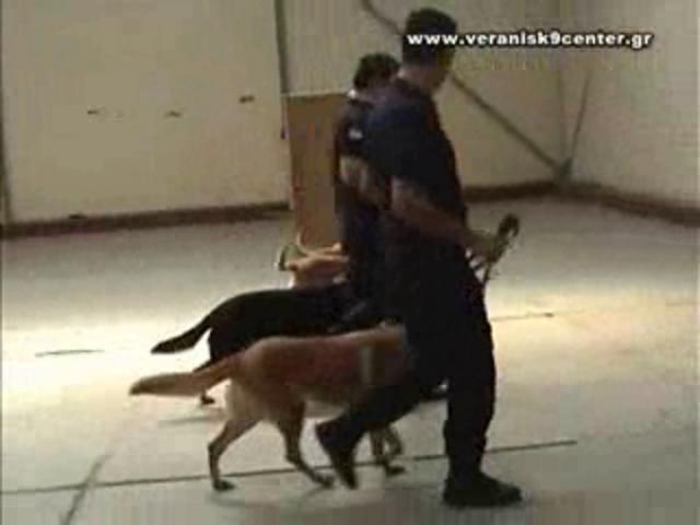 Image Result For Dog Training In