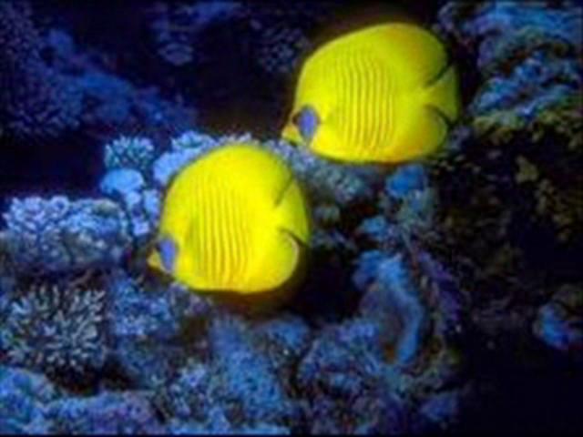 Peces marinos y tropicales around the world