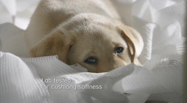 kleenex cottonelle on Vimeo
