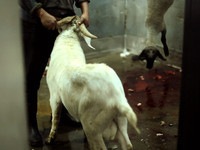 Sacrifice: A Slaughterhouse Documentary