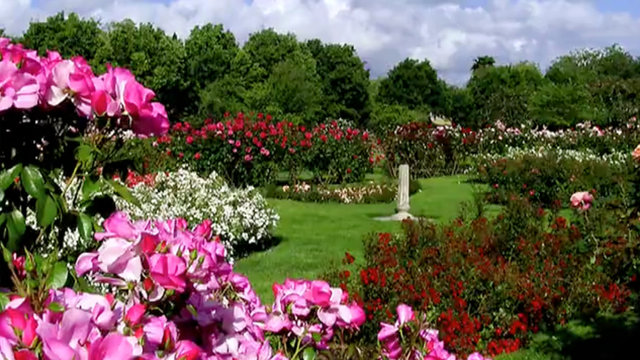 San Jose Municipal Rose Garden On Vimeo