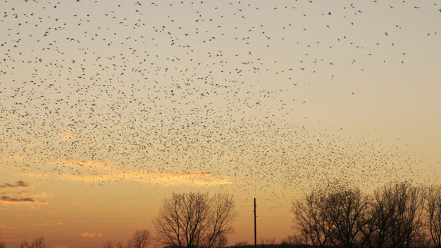 The Matrix: Featuring Millions of Black Birds