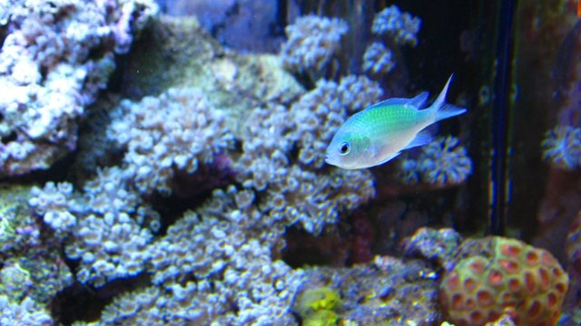 my 25 g nano reef invertebrates and fish. on Vimeo