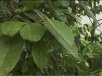 Msitu kwa ajili za jamii (2 – Filamu ya pili) Uchumi wa usitu wa jamii