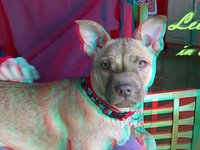 3D anaglyph of family dog Leena