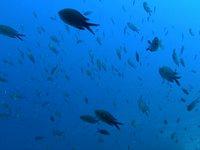 Immersione Punta Secca (Toscana)