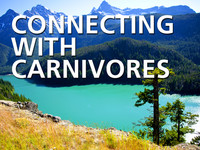 Connecting with Carnivores