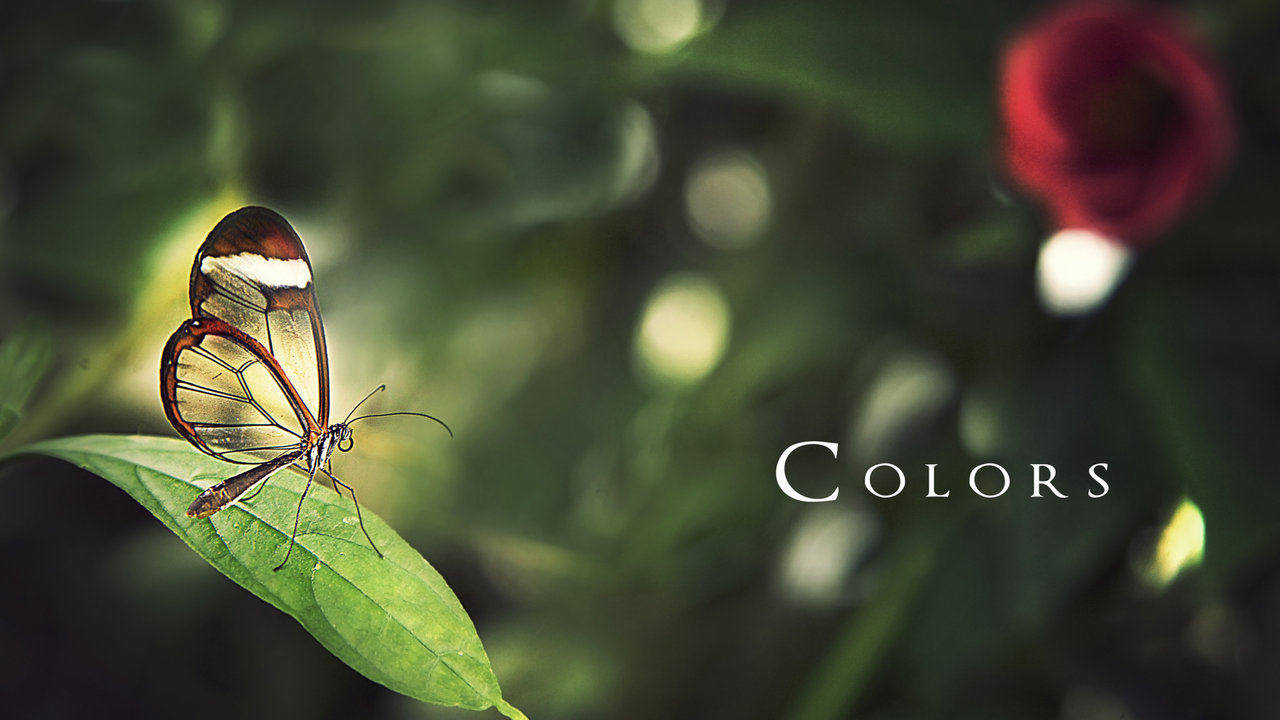 Colors Of Nature Book