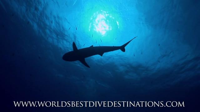 The Worlds Best Dive Destinations NEW TRAILER IN HD